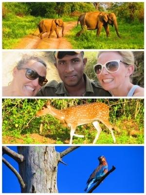 The Freedom Travellers Sri Lanka Safari