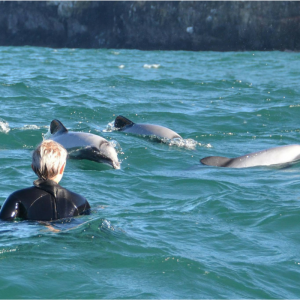 The Freedom Travellers swim with Hectors Dolphins in New Zealand